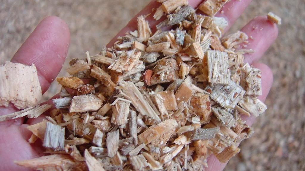 Red-Biomasa3